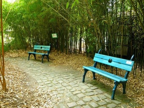 Jardin des sensations - Parc floral de Paris - Alexandre Lévy | DESARTSONNANTS - CRÉATION SONORE ET ENVIRONNEMENT - ENVIRONMENTAL SOUND ART - PAYSAGES ET ECOLOGIE SONORE | Scoop.it