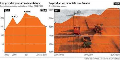 Les prix alimentaires mondiaux plongent au plus bas depuis sept ans | Questions de développement ... | Scoop.it