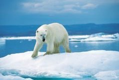 Global surveys show environment ranks low on public concerns ... | Crime and climate change | Scoop.it