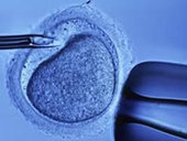 In Vitro Fartilization IVF-Treatment, Clinics, Centres, Hospitals, Services in chennai | BloomHealthcare | Scoop.it