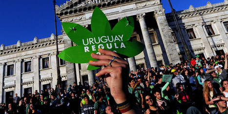 How Uruguay Legalized Marijuana Dealing - Huffington Post   Drug law reform   Scoop.it
