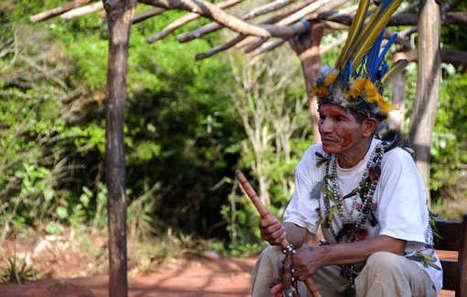 Brésil : une communauté guarani attaquée par des hommes armés | Survival International | Kiosque du monde : Amériques | Scoop.it