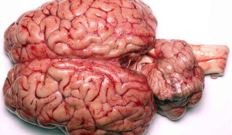What's the Difference Between the Right Brain and Left Brain? | Anatomy & Physiology articles | Scoop.it