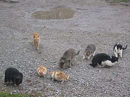 An Unusual But Valuable Business Skill: Herding Cats | Real Estate Plus+ Daily News | Scoop.it