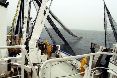La pêche industrielle menace l'écologie des océans | S.V.T : l'Homme responsable de son environnement | Scoop.it