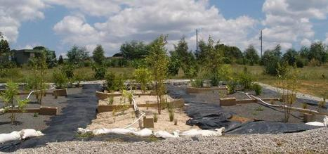 Filter bed substrates, plant types recommended for rain gardens | Sustain Our Earth | Scoop.it