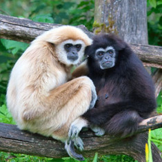 Love for Life? 12 Animals That Are (Mostly) Monogamous [Slide Show]: Scientific American | lonopensado | Scoop.it