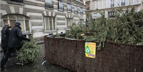 Plus de 50.000 sapins collectés et recyclés à Paris | Le flux d'Infogreen.lu | Scoop.it