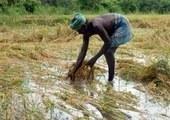 Maharashtra : une quarantaine de paysans se sont suicidés en un mois | Questions de développement ... | Scoop.it