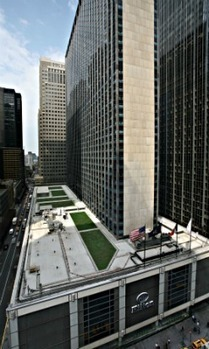Overnight New York » Going Greener: Cultivating a Green Roof at the New York Hilton | Vertical Farm - Food Factory | Scoop.it
