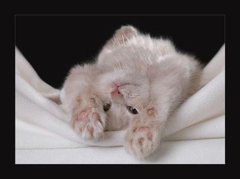 Yavru Kedi Resmi-Yavru Kedi Resimleri... | Baktabul | Scoop.it