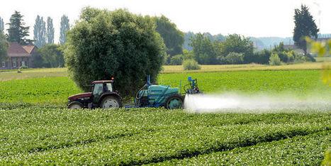 Perturbateurs endocriniens: Bruxelles en faute | Chimie verte et agroécologie | Scoop.it