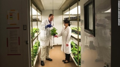 Tobacco plant may be key to Ebola drugs | my universe | Scoop.it