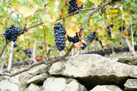 Nouveaux vins cultes du Valais   Gites de charme   Scoop.it