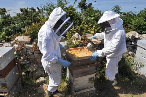 L'usage des néonicotinoïdes explose. L'Unaf dénonce une hausse de 31 % de l'utilisation des insecticides tueurs d'abeille depuis 2013 | EntomoNews | Scoop.it