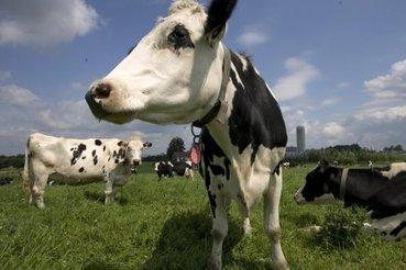 L'industrie alimentaire n'a pas besoin d'aide, dit le Conference Board   Consommation   agroalimentaire et lait   Scoop.it