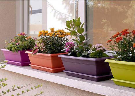 Les meilleures associations de légumes au balcon | agriculture urbaine | Scoop.it