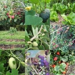 Bosques comestibles - Noticias Positivas | Cultivos Hidropónicos | Scoop.it