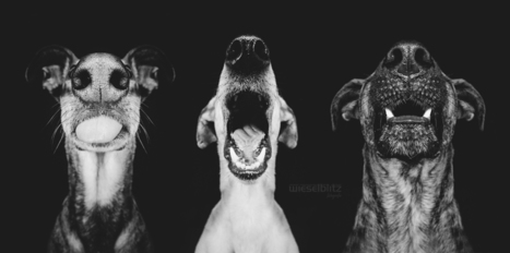 I fell in love with my X | Elke Vogelsang | Photography | Scoop.it