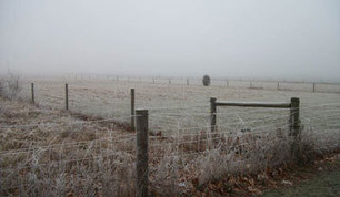 When Will the First Fall Frost Arrive in Illinois?   The Miracle of Fall   Scoop.it