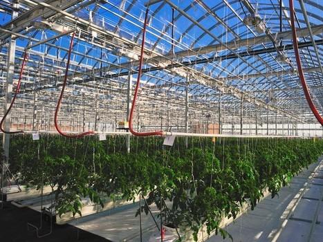Et si on transformait le toit de votre immeuble en potager?  - Rue89 | agriculture urbaine | Scoop.it