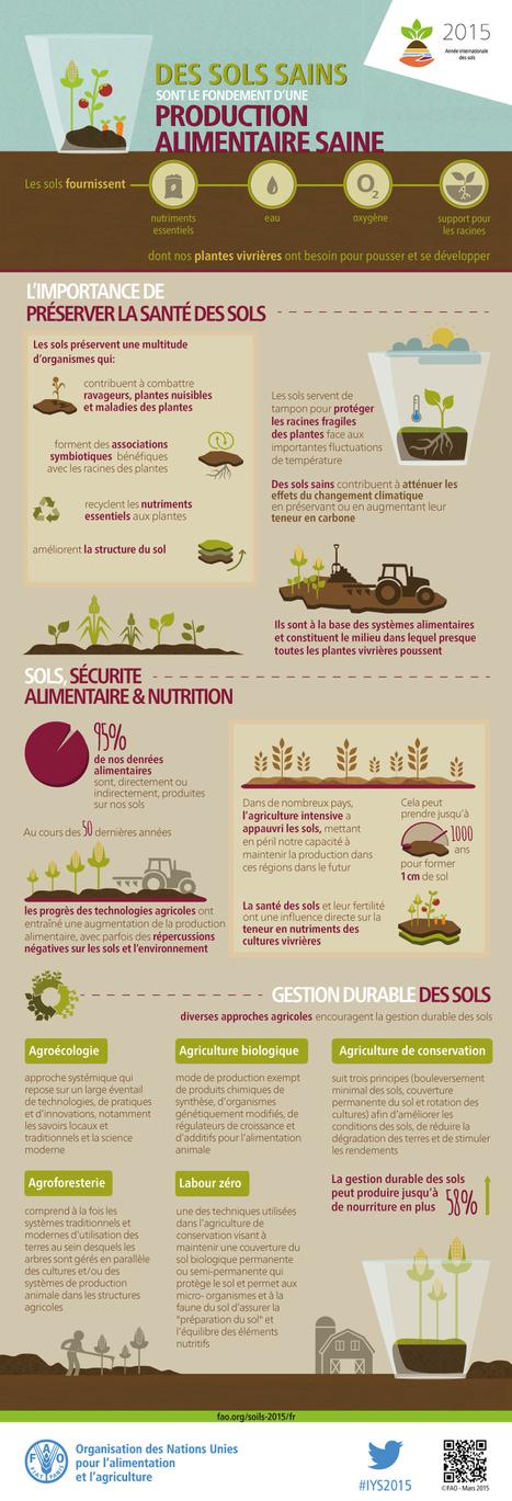 Des sols sains sont le fondement d'une production alimentaire saine | Un sol vivant pour nos enfants | Scoop.it