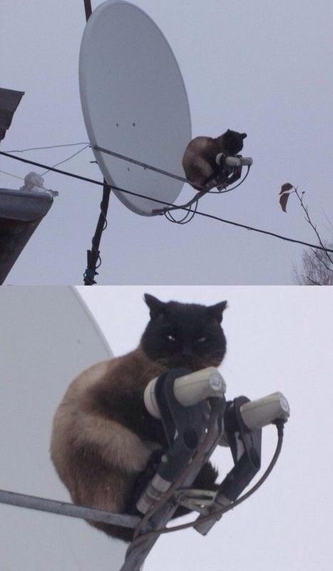 19 photos qui confirment que les chats et la logique font bien deux ! | CaniCatNews-actualité | Scoop.it