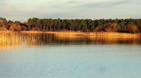 Sanguinet: opération nettoyage du lac!   Vacances dans les Landes   Scoop.it