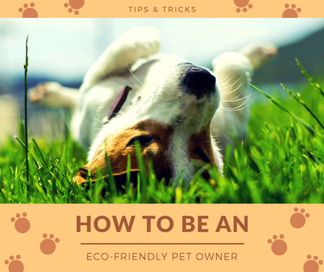 How to Be an Eco-Friendly Pet Owner? | Lifestyle | Scoop.it