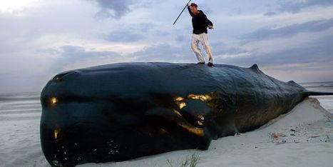 """Une version audio de """"Moby Dick"""" à écouter sur le Web   livres audio, lectures à voix haute ...   Scoop.it"""