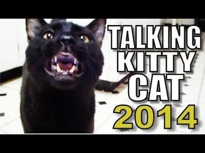 Talking Kitty Cat - 2014   network marketing   Scoop.it