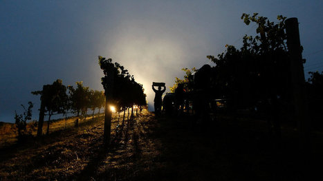 Microbes May Add Special Something to Wines | Autour du vin | Scoop.it