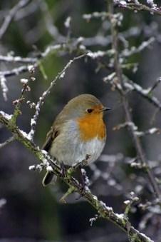 BBC WinterWatch – woodland | Conservation & Environment | Scoop.it