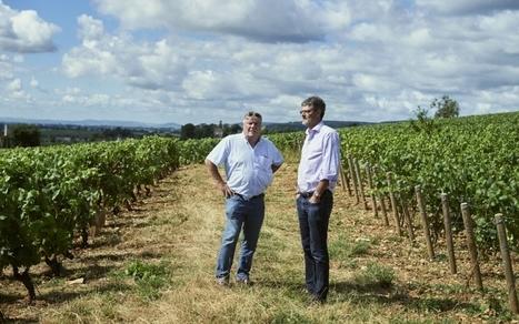 Dépérissement des vignes : il faut sauver le vin français   Winemak-in   Scoop.it