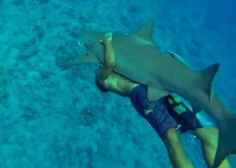 The Latest Terrible Trend: People Riding Sharks | Ocean Times | Scoop.it