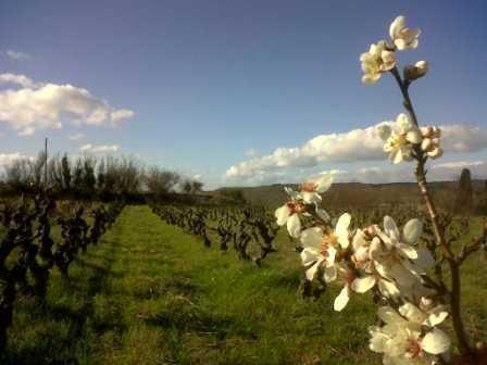 Secrétariat administratif pour domaine viticole | Télétravail : Demande devis | Scoop.it