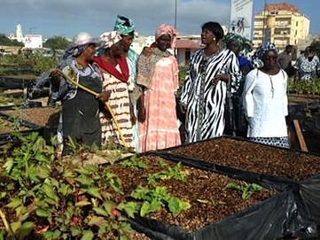 Zimbabwe: Urban Farming – Curse or Blessing? — City Farmer News | Vertical Farm - Food Factory | Scoop.it