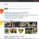 Les flux de Google+ bientôt intégrés dans Google Search, Twitter déplore | googleplus | Scoop.it