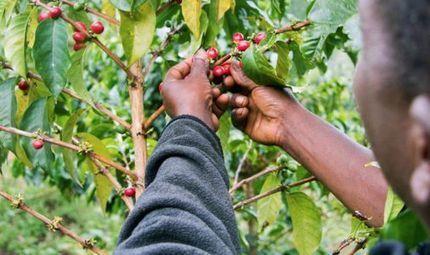 Smallholder farmers benefit from loan guarantee scheme | The People | Local Grain News | Scoop.it