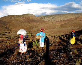 venado mestizo en la sierra de Catorce #wirikuta: Patrimonio Mundial Cultural y Natural de la UNESCO, es lo que debemos pedir para Wirikuta. | Patrimonio cultural | Scoop.it
