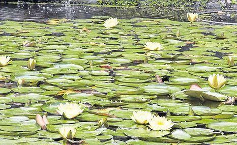 El secreto de las plantas para sobrevivir bajo el agua - El Comercio (Ecuador)   All About Food   Scoop.it