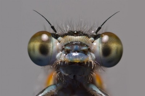 A View of the UK - Macro photography by Paul Iddon | Photo Creative 365 | Everything Photographic | Scoop.it