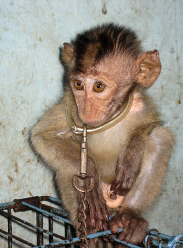 Wildlife Trade - Why Is No-one Shouting About Animal Welfare? | State of Nature | Scoop.it