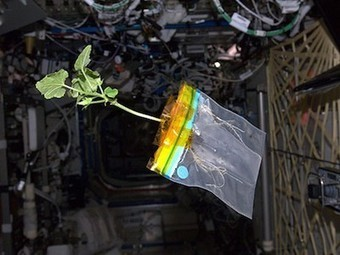Surprisingly Thoughtful  Zucchini Blogs From Space | Vertical Farm - Food Factory | Scoop.it