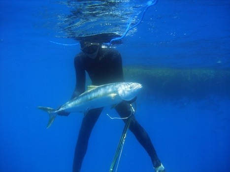 Scuba Divers and Spearfishermen Balk at 68 New Regulations Recommended to Protect Coral | All about water, the oceans, environmental issues | Scoop.it