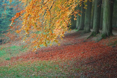 Pourquoi les feuilles tombent-elles en automne ? | Au hasard | Scoop.it