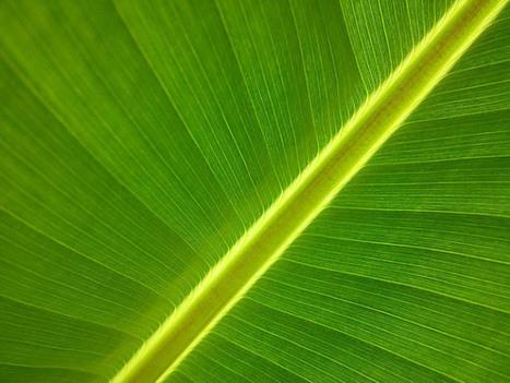 La fotosíntesis artificial logra un rendimiento récord | Educacion, ecologia y TIC | Scoop.it