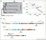 ScienceDirect.com - Current Opinion in Microbiology - The genome biology of phytoplasma: modulators of plants and insects | Host-Microbe Interactions | Scoop.it