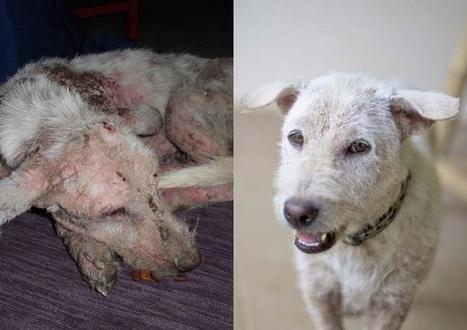 Lamby, ou le bouleversant sauvetage d'une chienne errante à Bali | Bali, Java,  (Indonésie),  Malaisie | Scoop.it