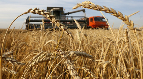 Russia to become world's largest wheat exporter in 2016 | CIHEAM Press Review | Scoop.it